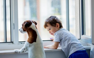 How Scratch-Resistant Window Film Benefits Dog Owners